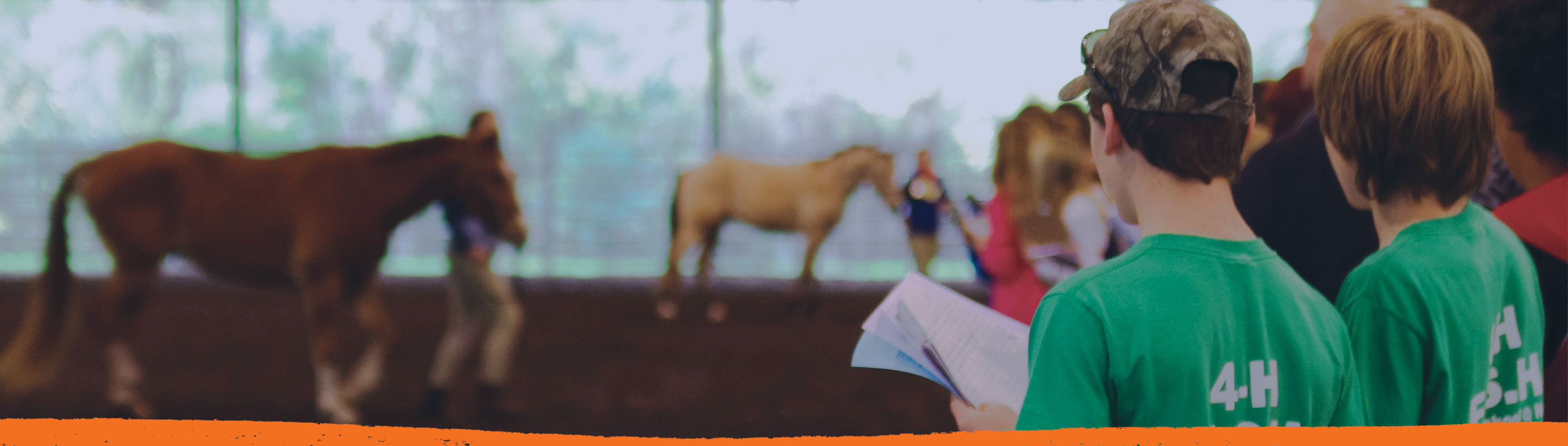 4-H students judging halter horses at the UF Horse Teaching Unit