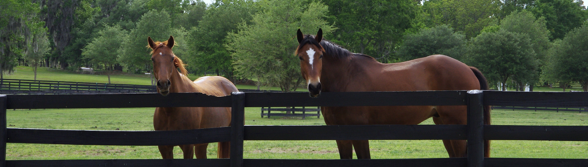 2 horses at fence